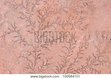 Dendrite On Sandstone Close Up