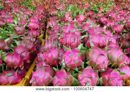 Dragon Fruit, Agricultural Product, Vietnam