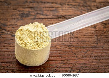 pine pollen powder (nutrition supplement rich in testosterone) in a plastic measuring scoop against grunge wood surface