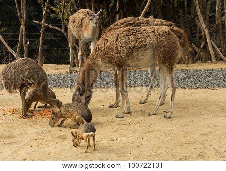 The antilops of zoological park in Paris.