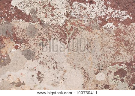 Light Brown And Gray Lichens On Rock Face