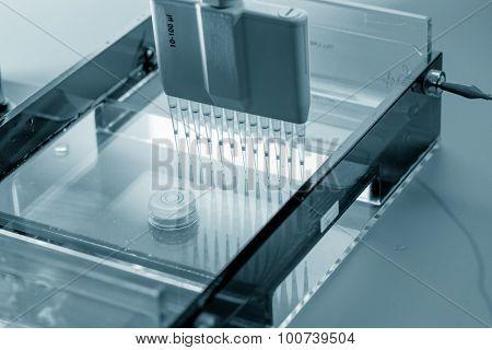 Multi pipette in genetic laboratory