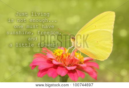 Just living is not enough, one must have sunshine, freedom and a little flower - quote with a yellow Cloudless Sulphur butterfly on a red flower