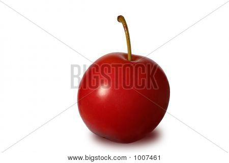 Red Cherry-Plum