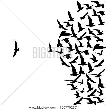 Flying Seagull Birds