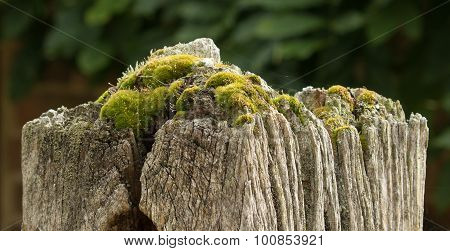 Gatepost With Moss