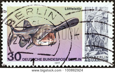 WEST BERLIN - CIRCA 1977: A stamp printed in Germany shows a Paddlefish