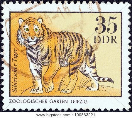 GERMAN DEMOCRATIC REPUBLIC - CIRCA 1975: A stamp printed in Germany shows a Siberian tiger