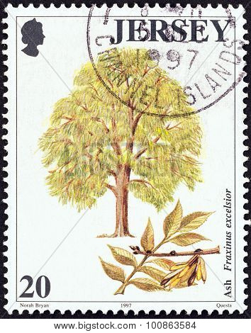 JERSEY - CIRCA 1997: Stamp shows Ash tree (Fraxinus excelsior)