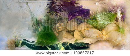 Frozen   Flower Of         Jessamine And Clematis