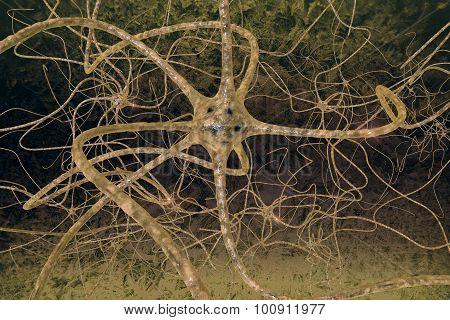 Neurons Of The Human Brain