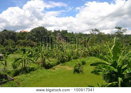 Bali Landscape Lush Jungle