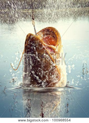Big river catfish. River predator poster