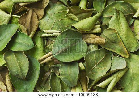 Makrut Lime Leaves, Dry Herbs