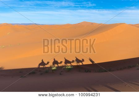 Africa, Morocco - view of Erg Chebbi Dunes - Camel excursion in sahara desert