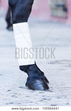Bandage On A Horse Leg