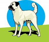 Clip art illustration of an alert shepherd dog poster