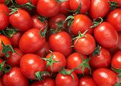 Cherry tomato Raw fruit and vegetable backgrounds overhead perspective, part of a set collection of healthy organic fresh produce poster