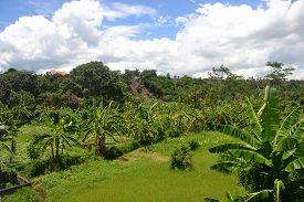 Bali Landscape Lush Jungle