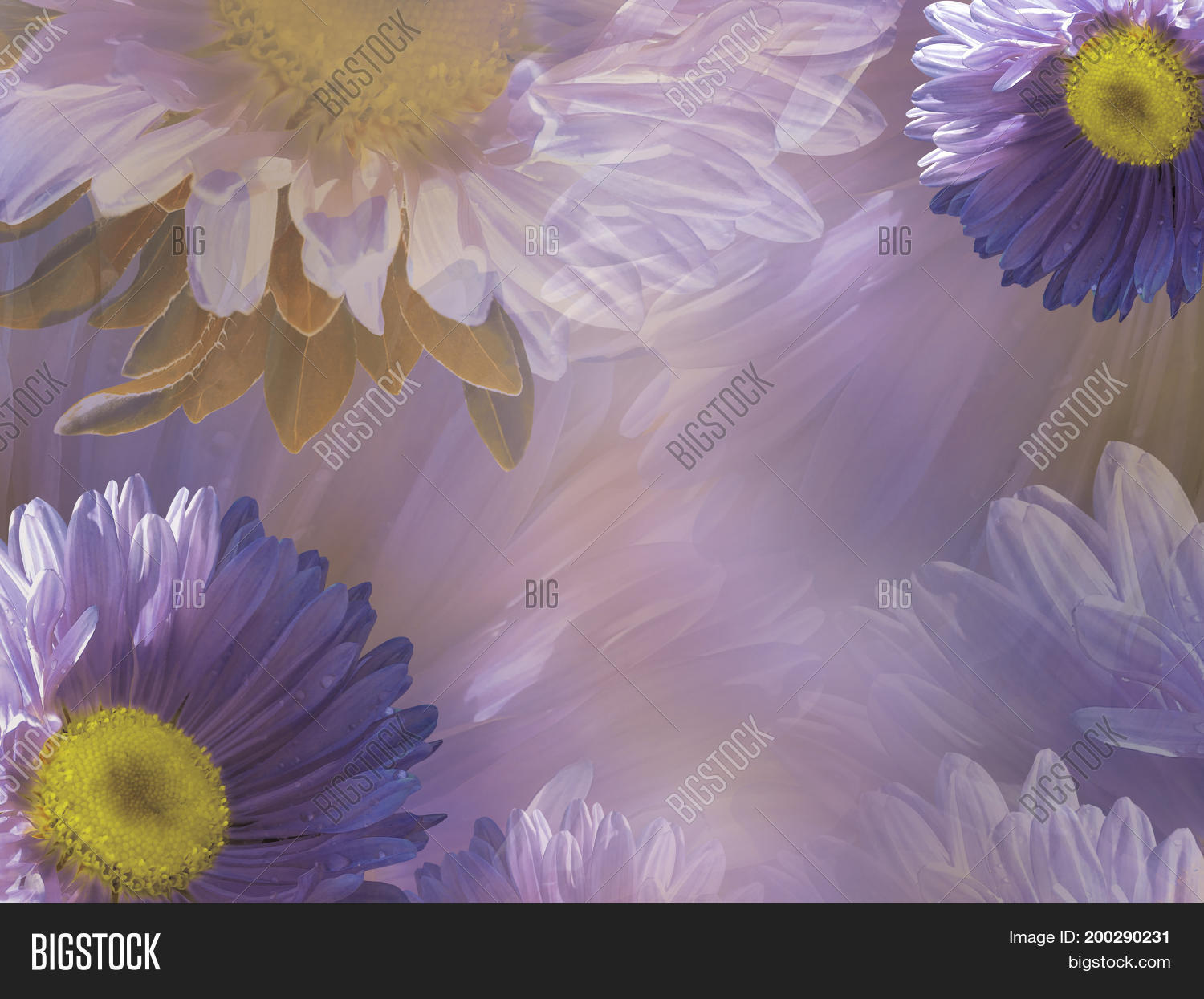 Floral violet white image photo free trial bigstock floral violet white beautiful background of daisy wallpapers of flowers purple yellow chamomile izmirmasajfo