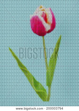 Illustration. Cross-stitch. Bright scarlet Tulip flower hips against blue sky.