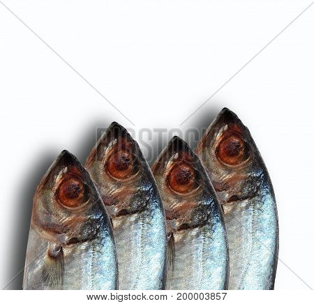 4 of  tunas head on white background ,sea fish