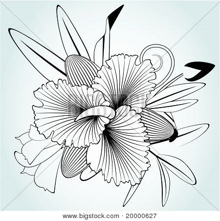 Flowers orchids on a white background for the design of