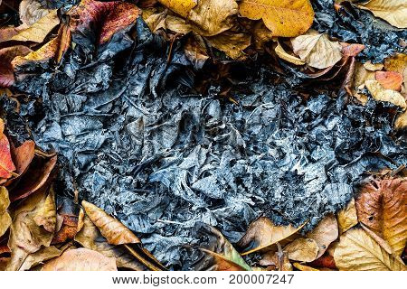 Dry autumn leaf. live for you and burn for you