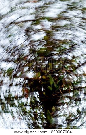 blurred photo abstract a branch against wood greens confused winter concept