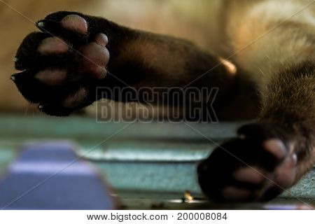 slum pet in bangkok sleep cat foot