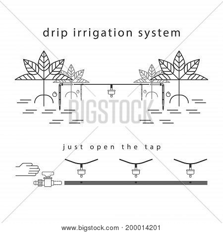 Line illustration of the drip irrigation system.