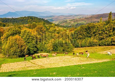 Great Autumnal Countryside In Mountains