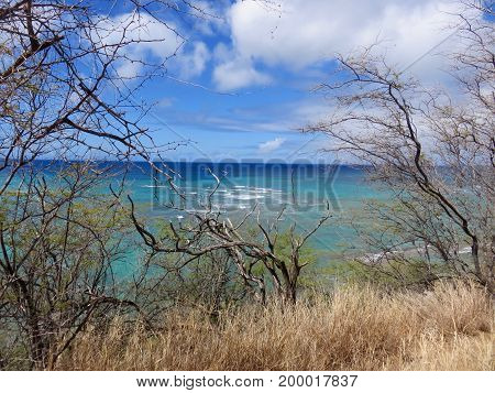 Beautiful Seaside View in Hawaii - Turquoise and Blue Ocean with Reef from a Bluff with Gnarled Native Trees and Grasses.