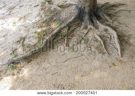 tree roots and green forest in public park