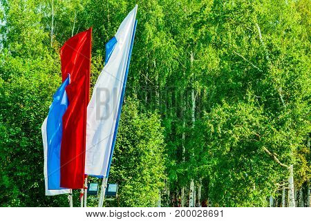 The Russian flag of the individual panels on a background of green Russian birches