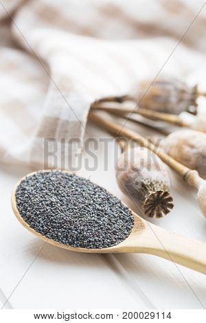 Dried poppy heads and seeds. Blue poppy.