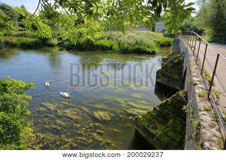 Packhorse Bridge on the river Avon at Barton Farm Country Park, Bradford on Avon, UK