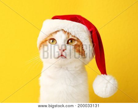 Cute cat in Santa Claus hat on color background