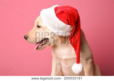 Cute dog in Santa Claus hat on color background