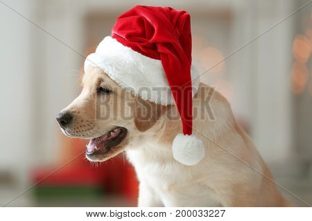 Cute dog in Santa Claus hat on blurred background