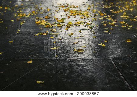 Alley with fallen leaves after rain
