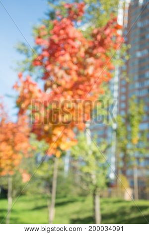 Autumn landscape in park. Blurred background. Bokeh.