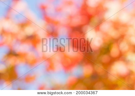 Autumn blurred landscape with leaves. Fall pattern. Abstract background.