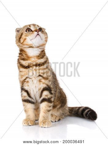 pets, domestic and animals concept - cat on white
