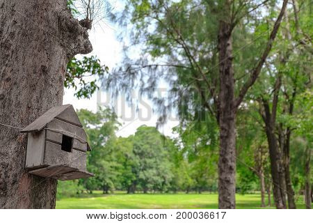 A bird house or bird box in summer with natural green leaves background