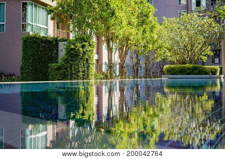 Reflexion Of Small Trees In A Clear Water Of Pool