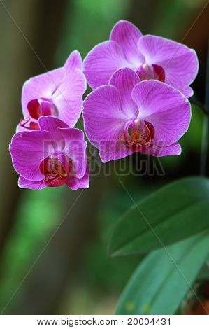 Multi-colored orchids