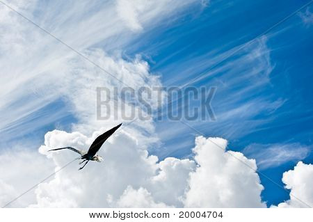 Bird In Flight Against Stunning Blue Sky With Clouds Freedom Concept