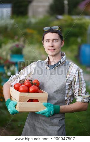 Young farmer guy with gray apron holds tomato box at summer cottage in summer