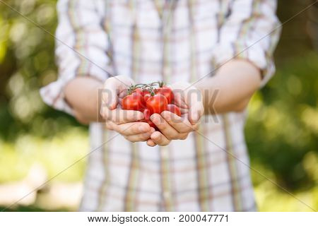 Photo of young agronomist in plaid shirt with cherry tomatoes in hands